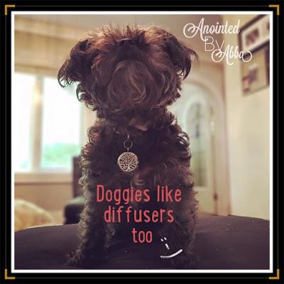 Dog Diffuser !!!